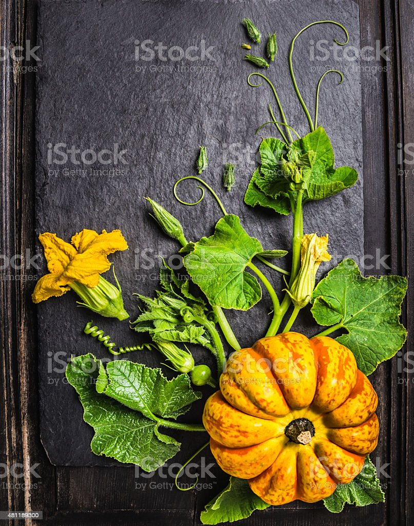 pumpkin composition with stems, leaves, flowers´on  dark background , top view stock photo
