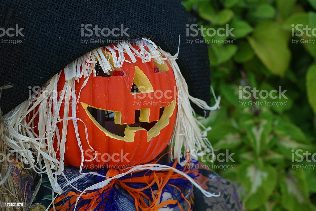 Pumpkin Face Close Up royalty-free stock photo