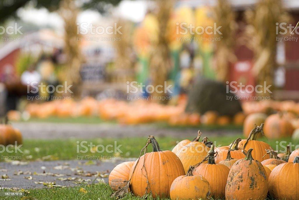 Pumpkin Farm Fun stock photo