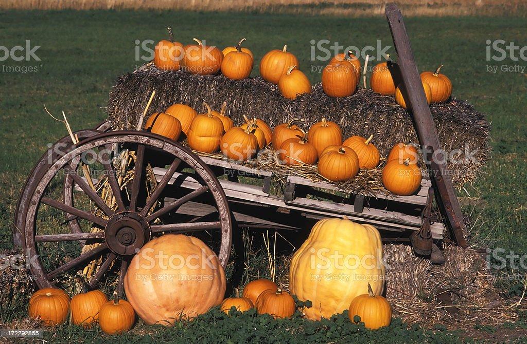 pumpkin farmers market royalty-free stock photo