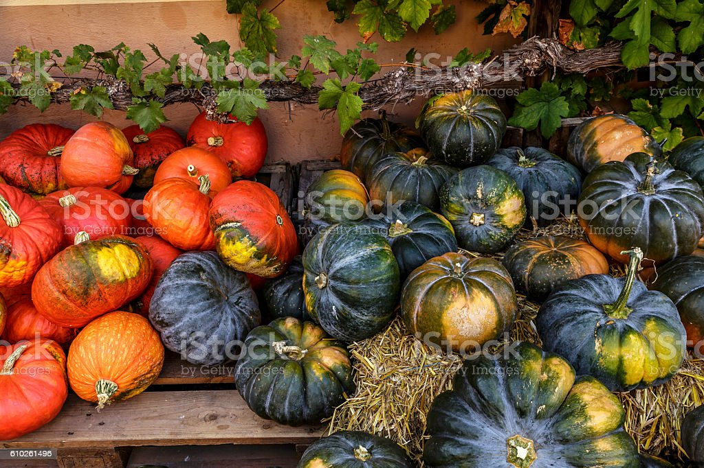 pumpkin festival stock photo