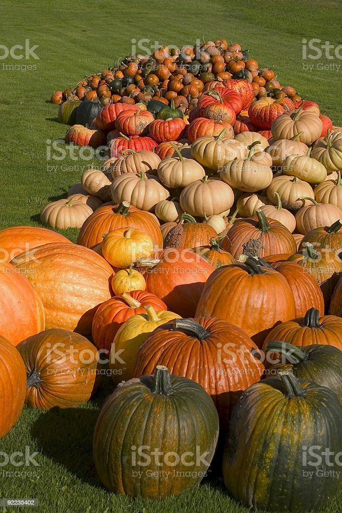 Pumpkin Harvest 1 royalty-free stock photo