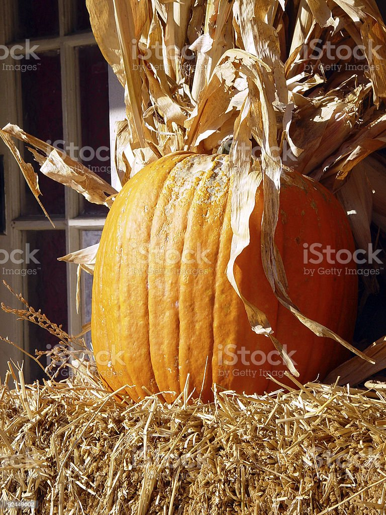 Pumpkin in Autumn royalty-free stock photo