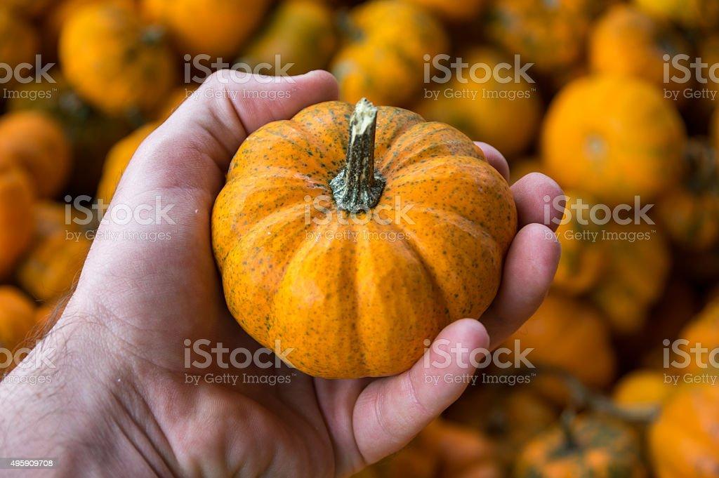 Pumpkin In Hand stock photo