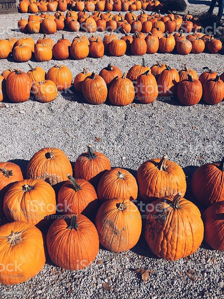 Pumpkin Market stock photo
