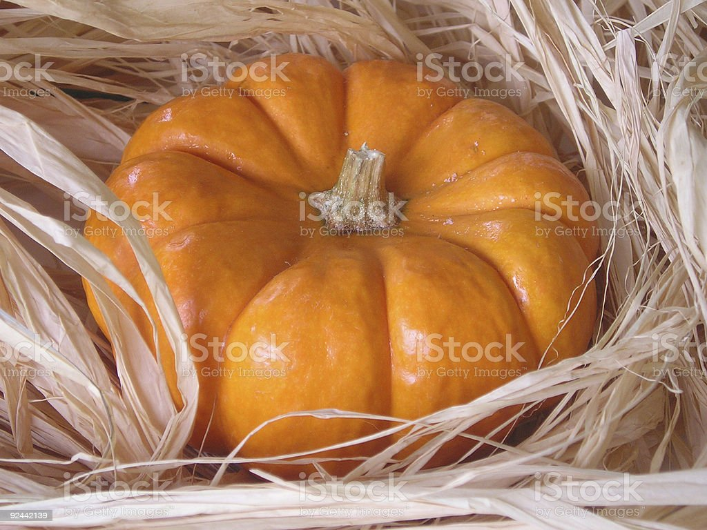 Pumpkin on rafetta royalty-free stock photo