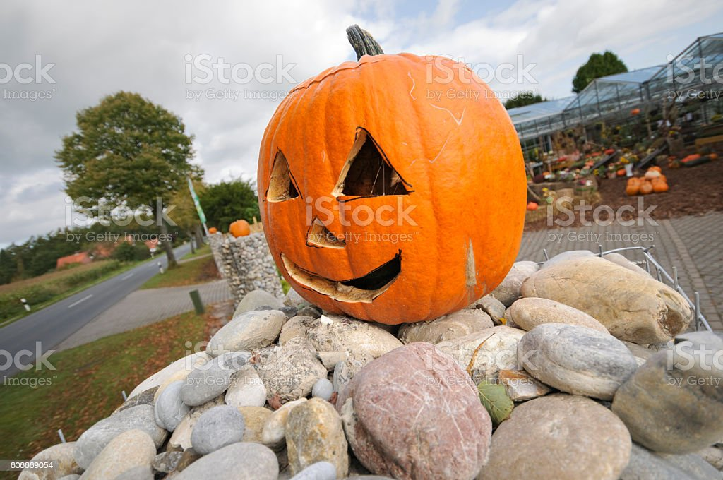 pumpkin on the stones stock photo