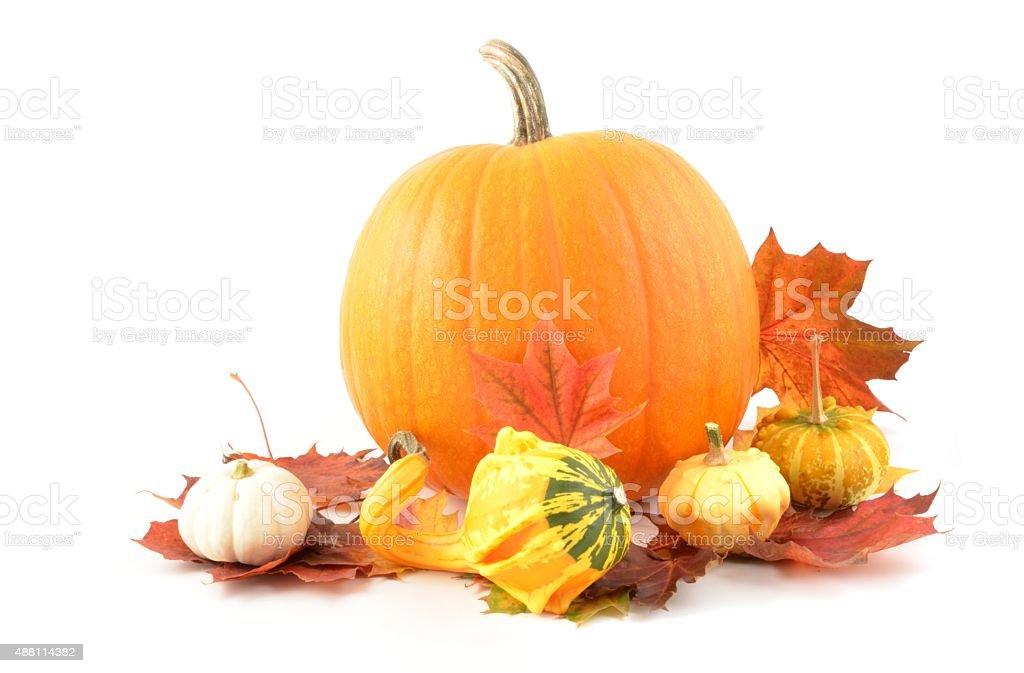 Pumpkin on white background stock photo