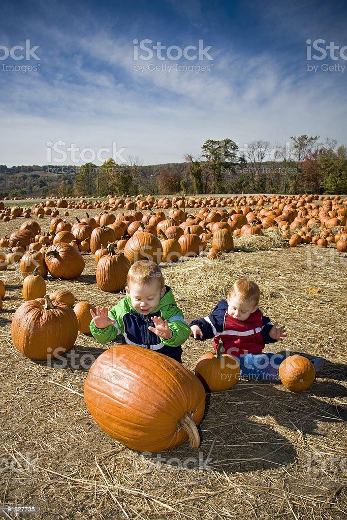 Pumpkin patch fun royalty-free stock photo