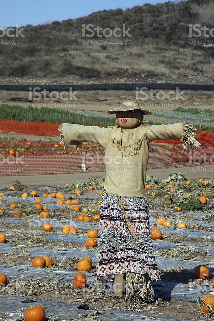 Pumpkin patch scarecrow royalty-free stock photo