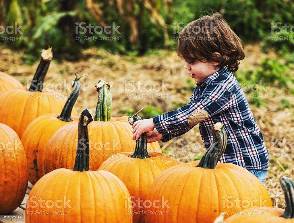 Pumpkin Picking Boy stock photo