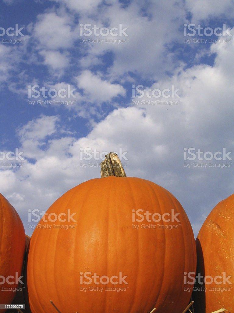 Pumpkin Season 1 stock photo