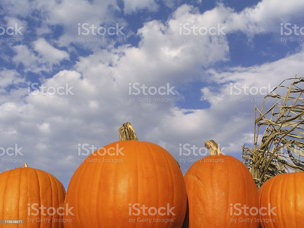 Pumpkin Season 2 stock photo