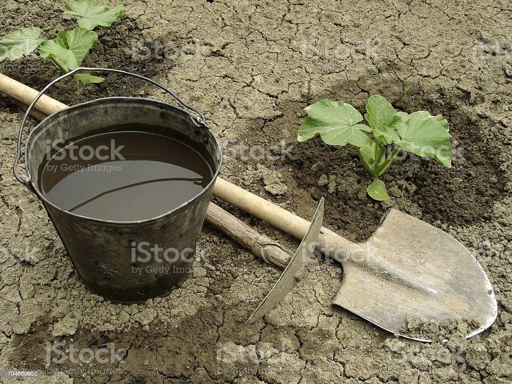 pumpkin seedlings stock photo