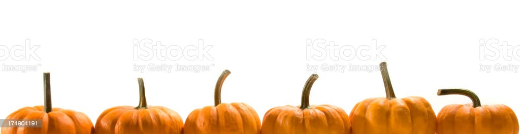Pumpkin Squash Crop in a Row for Autumn Party Frame royalty-free stock photo