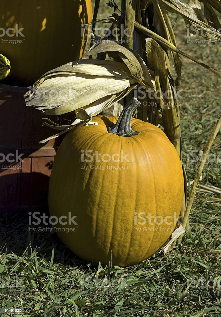 Pumpkin Time Again royalty-free stock photo