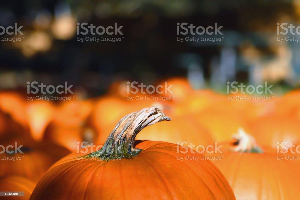 Citrouille haut photo libre de droits