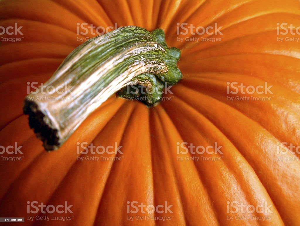 Pumpkin Top stock photo