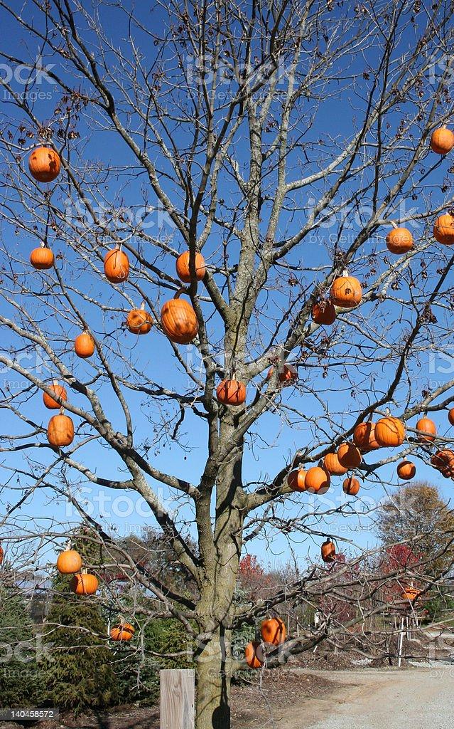Árbol de calabaza foto de stock libre de derechos