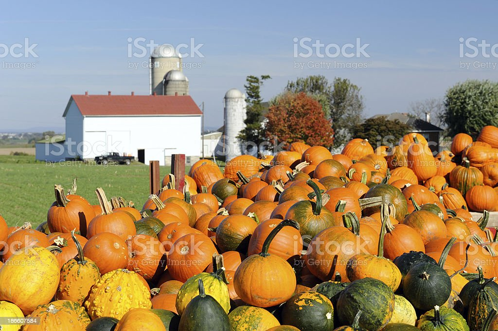 Pumpkin Wagon in Lancaster stock photo