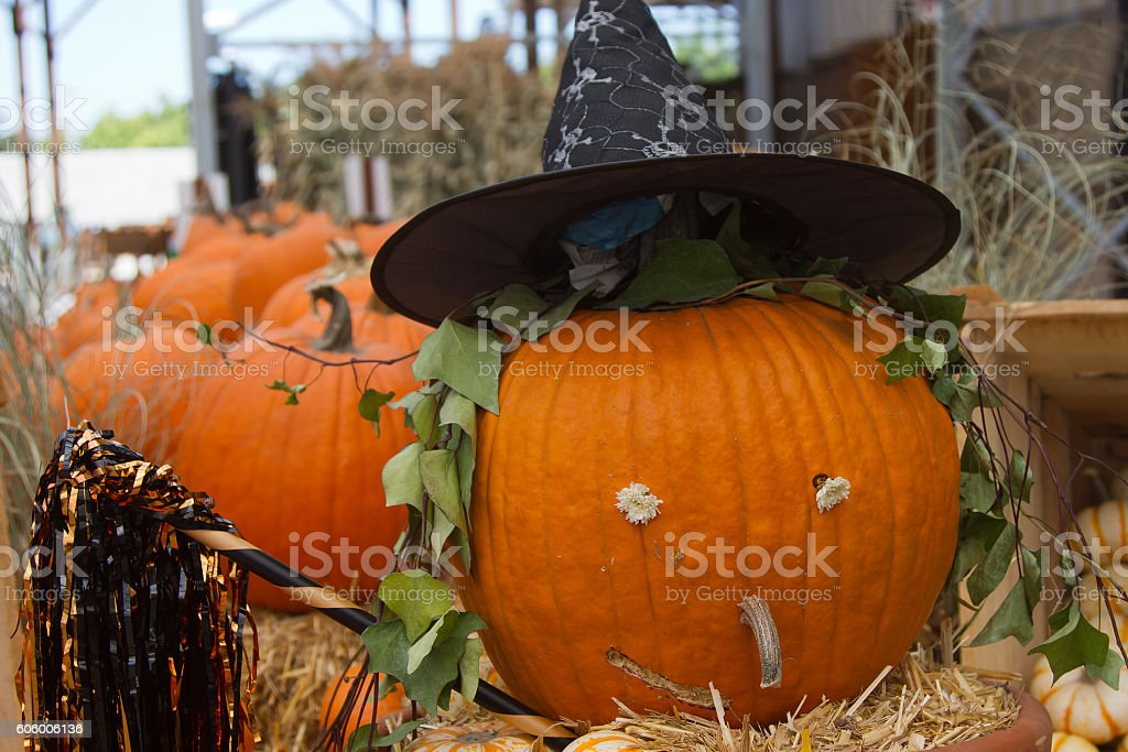 Pumpkin Witch royalty-free stock photo