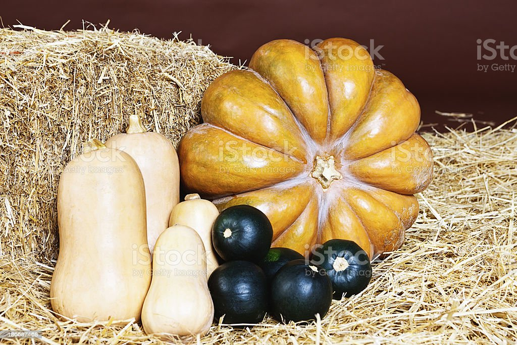 Pumpkin with butternut and gem squashes on straw stock photo