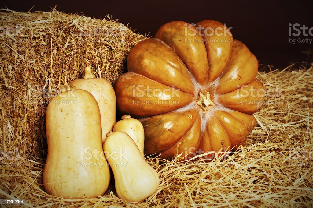 Pumpkin with butternut squash, looking golden and delicious, on straw stock photo