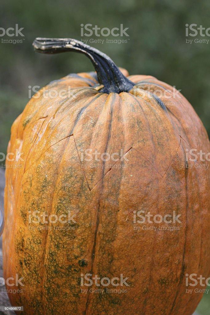 pumpkin01 royalty-free stock photo