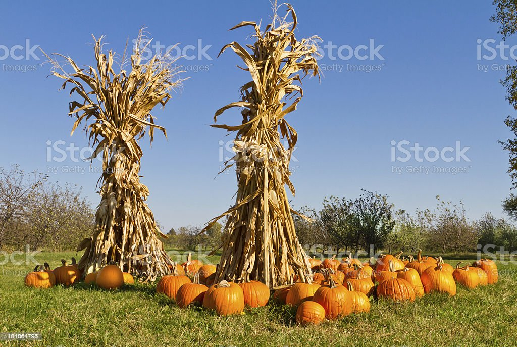 Pumpkins and corn stalks at farmers market stock photo