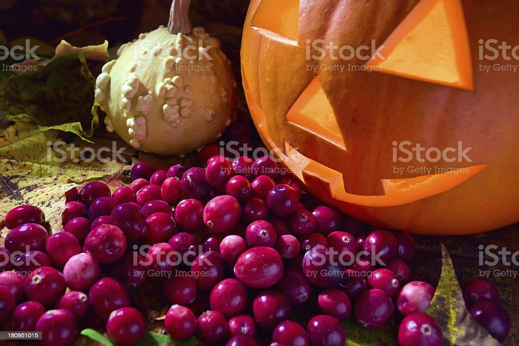 pumpkins and cranberry royalty-free stock photo