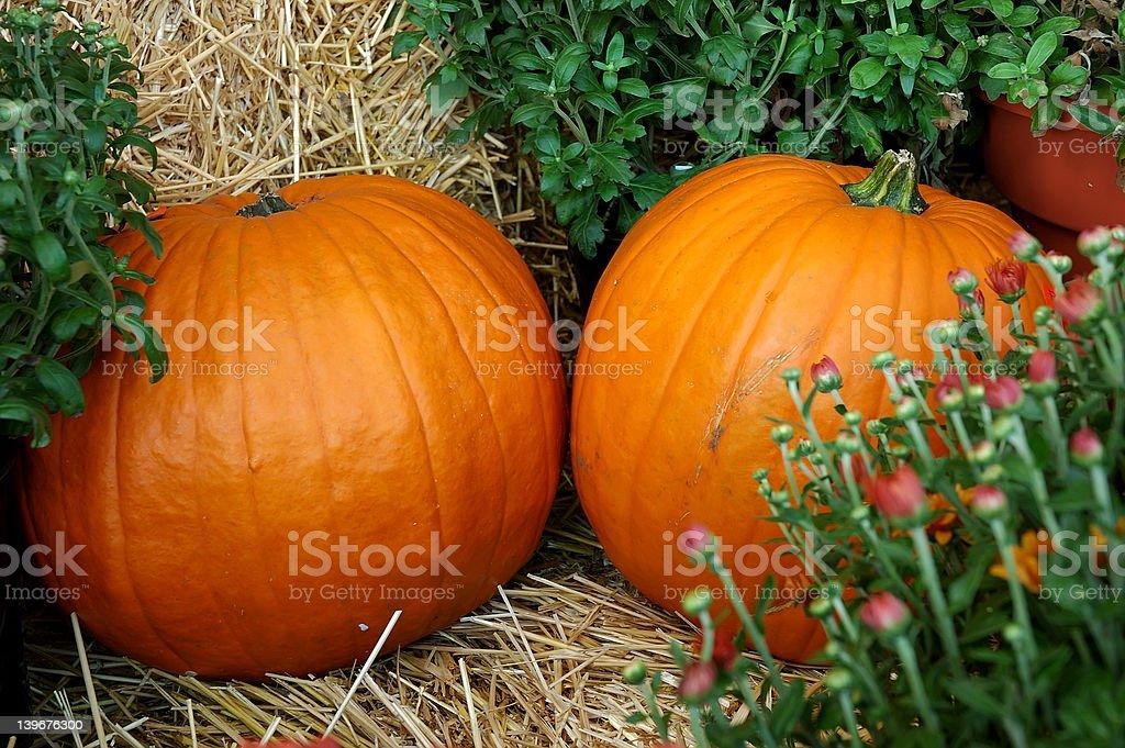 Pumpkins and Mums royalty-free stock photo