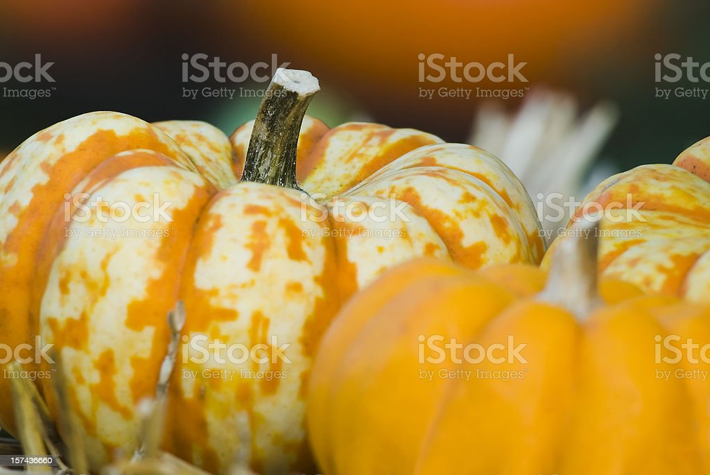 Pumpkins and other fall crops - III royalty-free stock photo