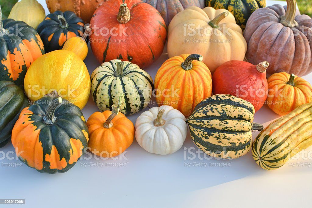 Pumpkins and squashes stock photo