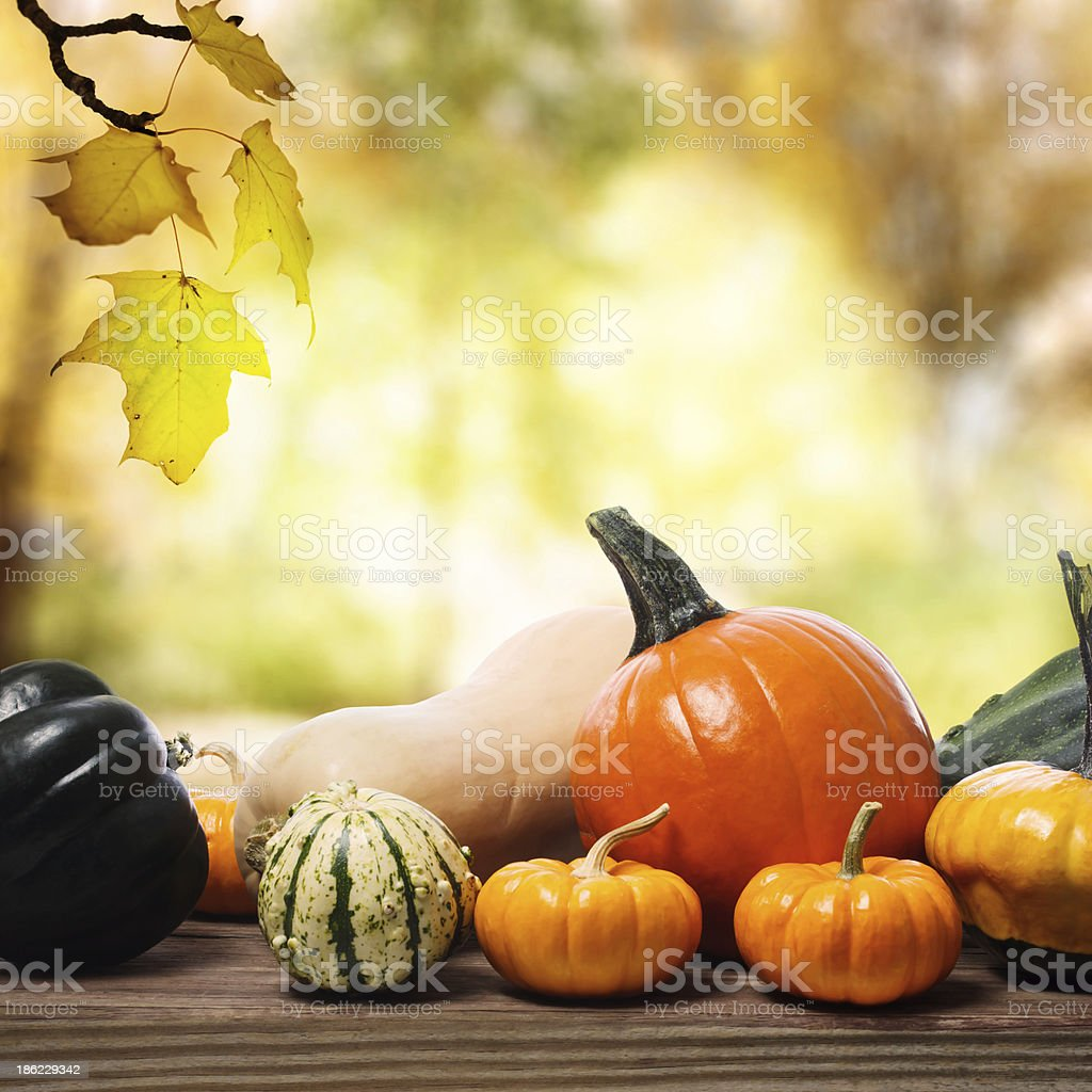 Pumpkins and squashes with a shinning fall background stock photo