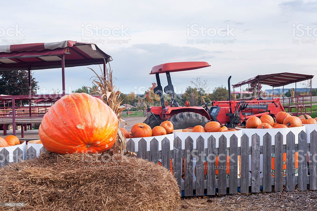 pumpkins and Tractor stock photo