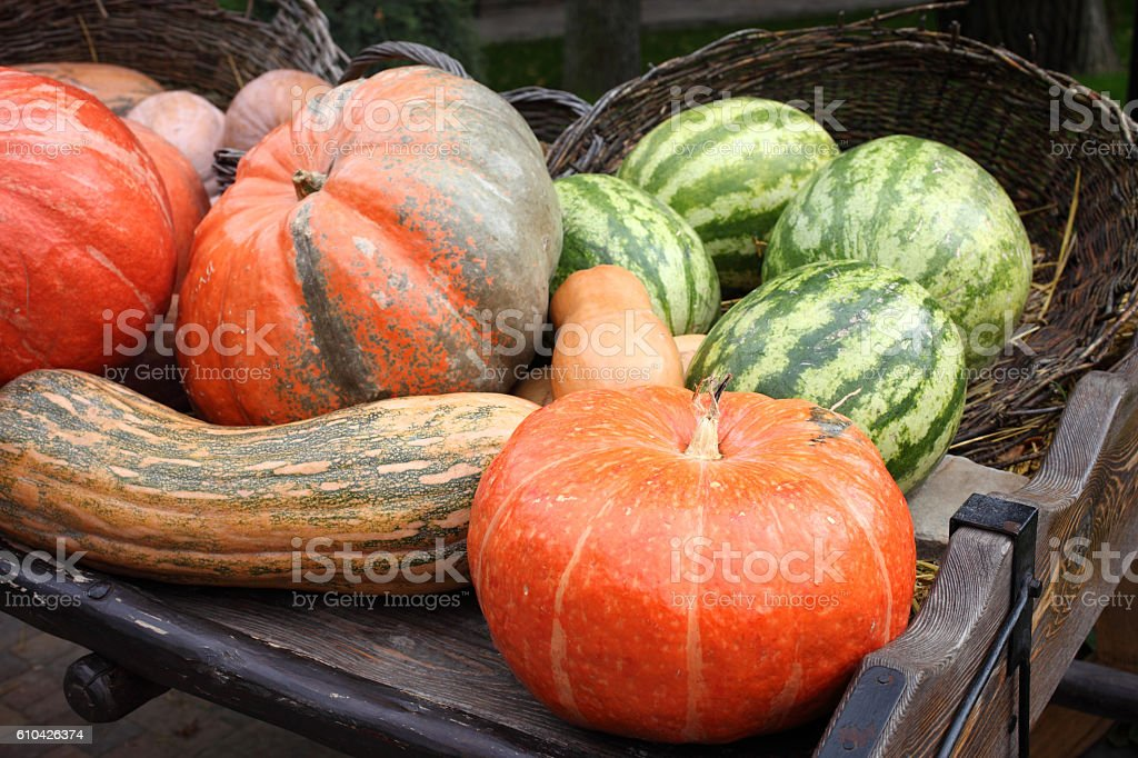 Pumpkins and watermelons stock photo