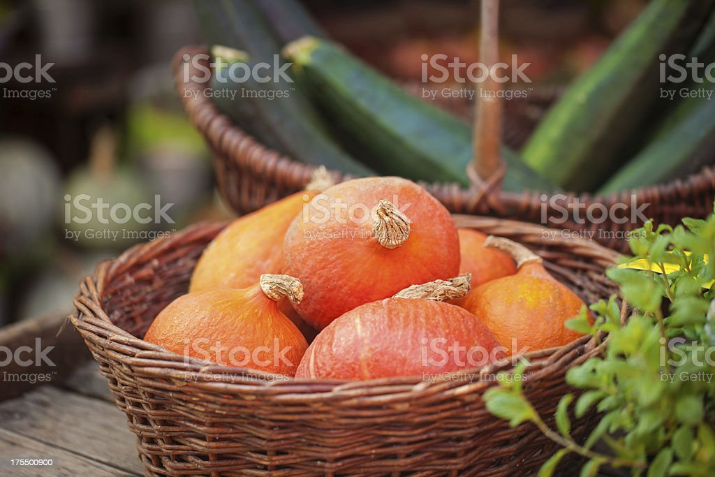 Pumpkins and zucchini in a buskets royalty-free stock photo
