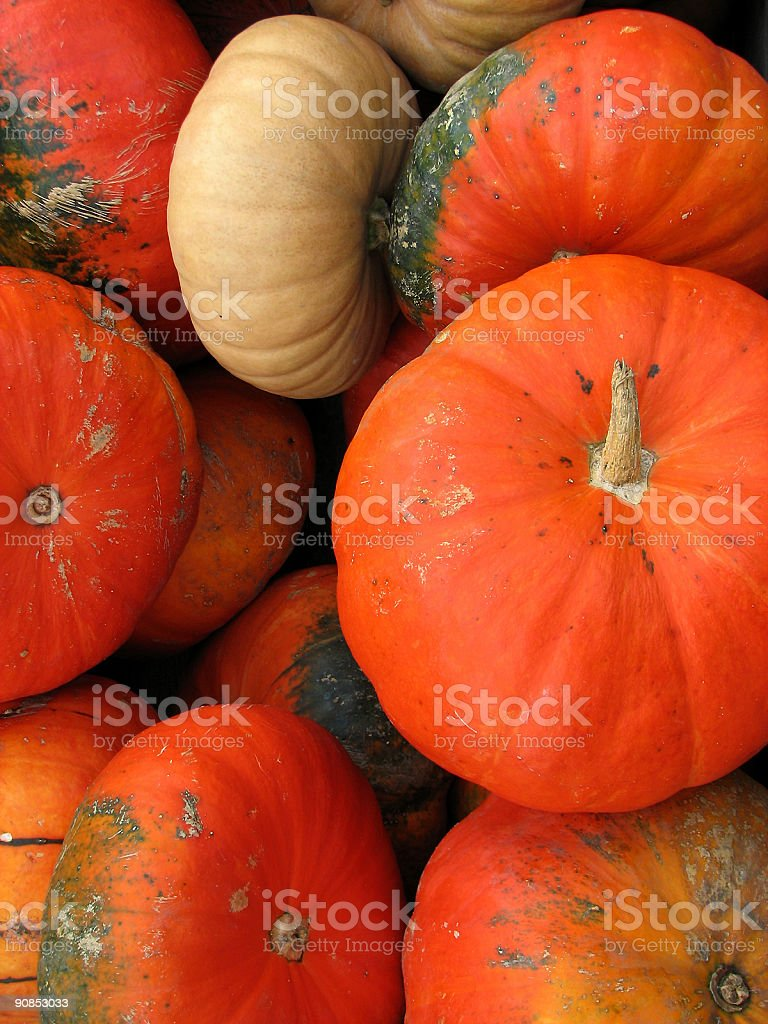 Pumpkins: autumn colors royalty-free stock photo