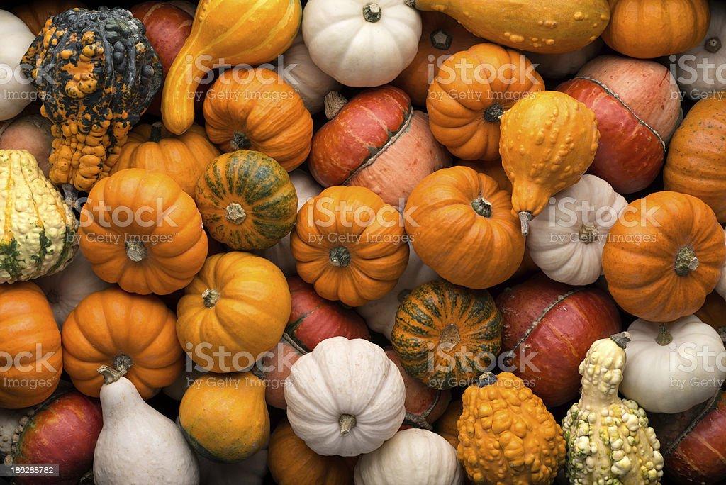 Pumpkins background stock photo