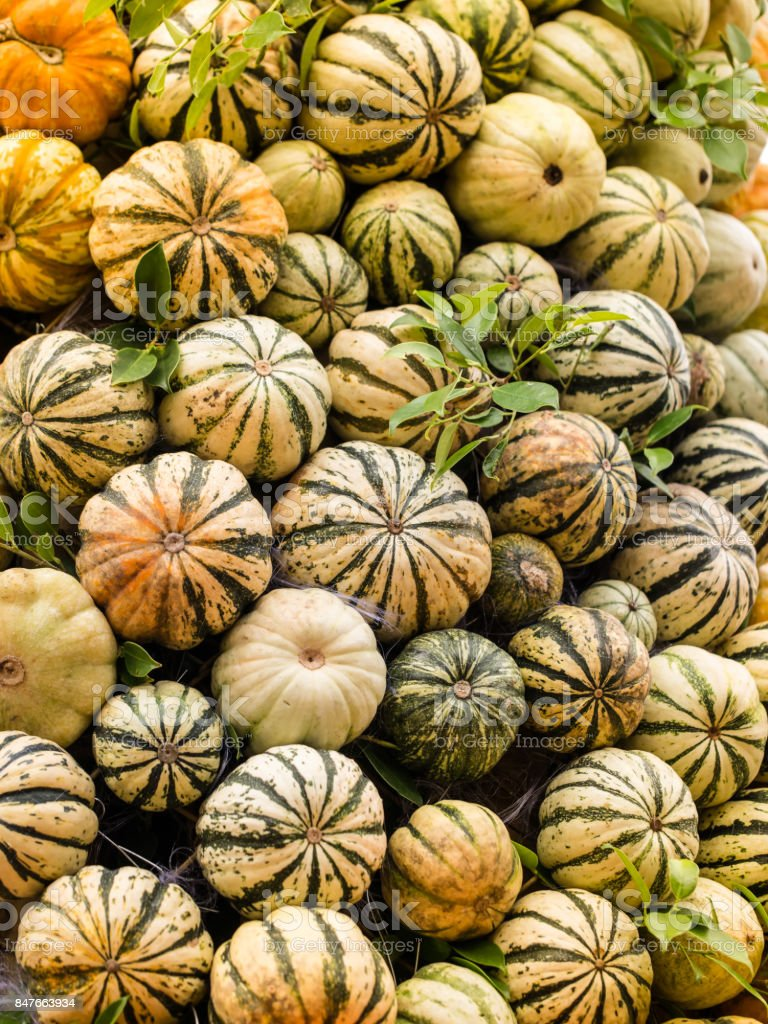 Pumpkins. Background. stock photo