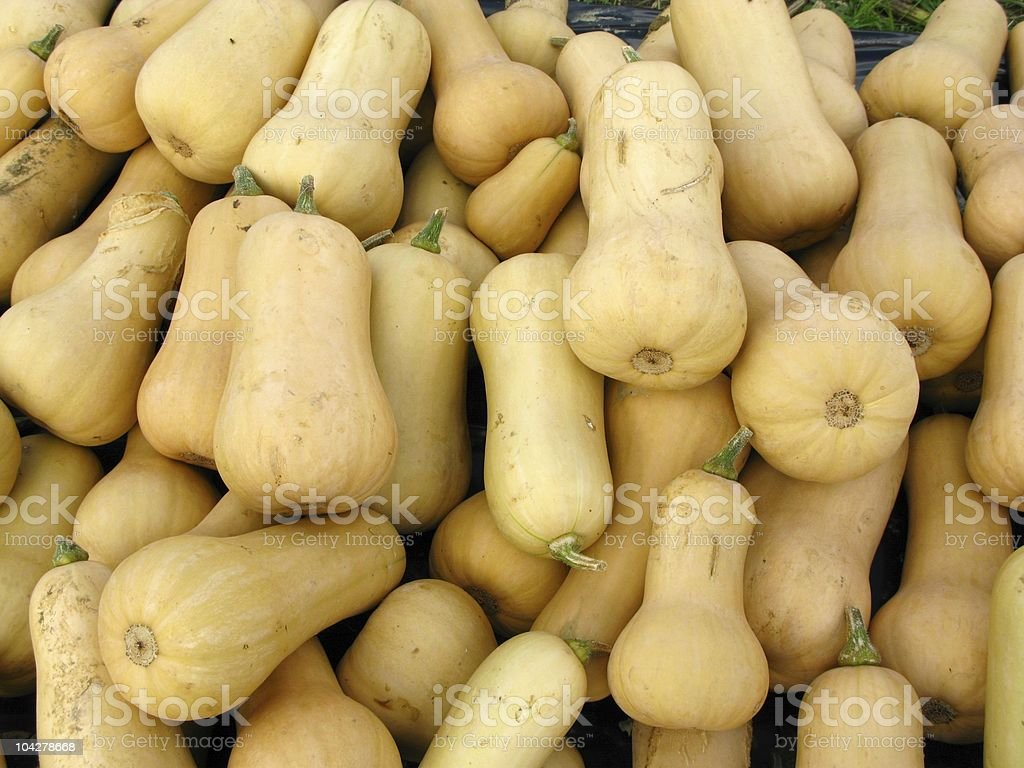 Pumpkins Butternut Squash royalty-free stock photo