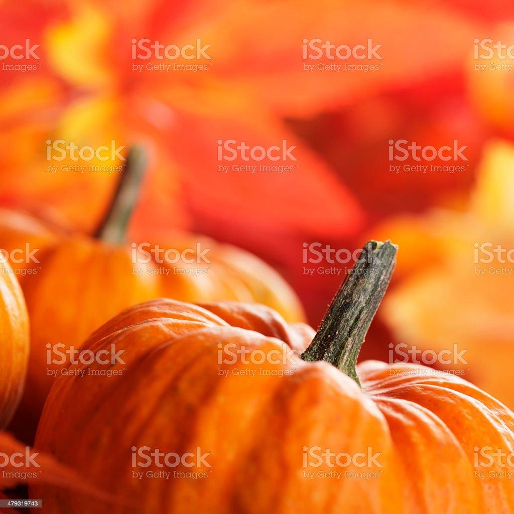 Pumpkins close-up royalty-free stock photo