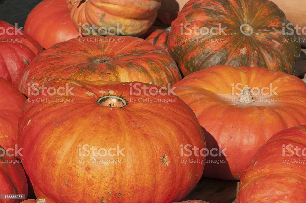 Pumpkins - freshly harvested royalty-free stock photo
