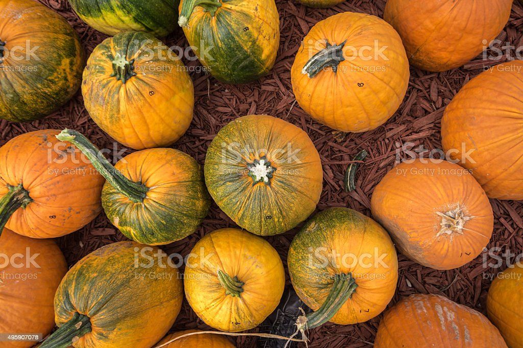 Pumpkins From Above stock photo