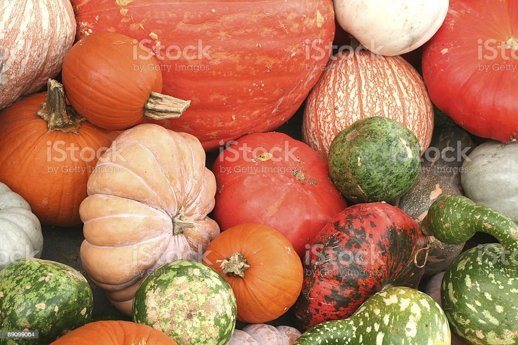 pumpkins & gourds royalty-free stock photo