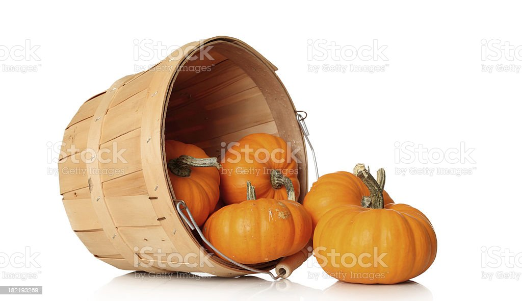 Pumpkins in a basket royalty-free stock photo