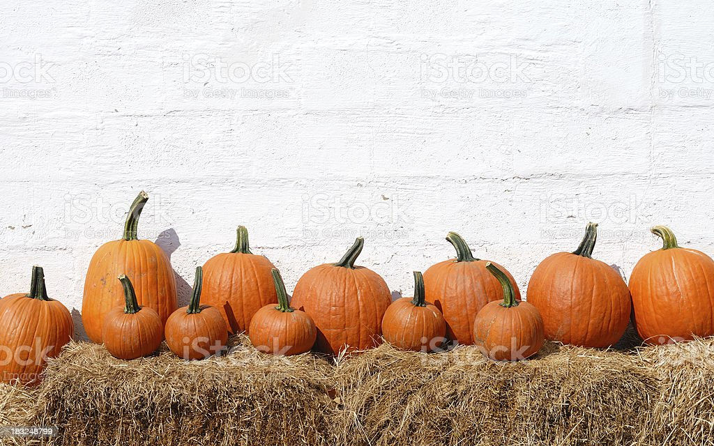 Pumpkins in a row stock photo