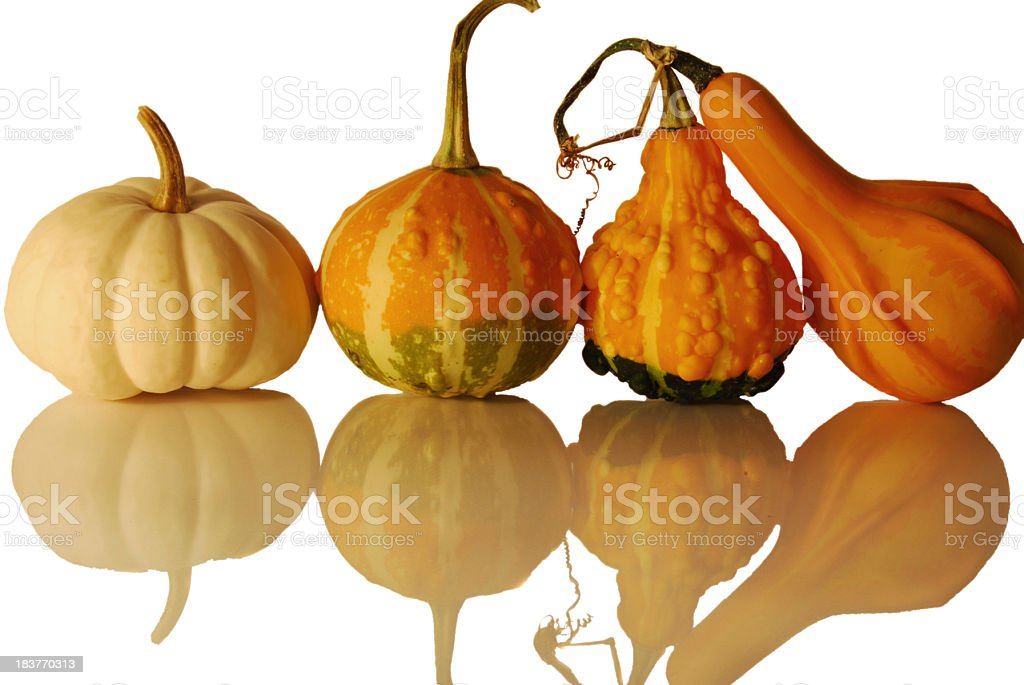 Pumpkins in a row with reflection stock photo