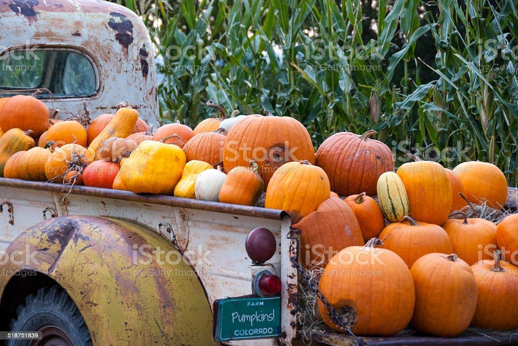 Pumpkins in a Truck stock photo