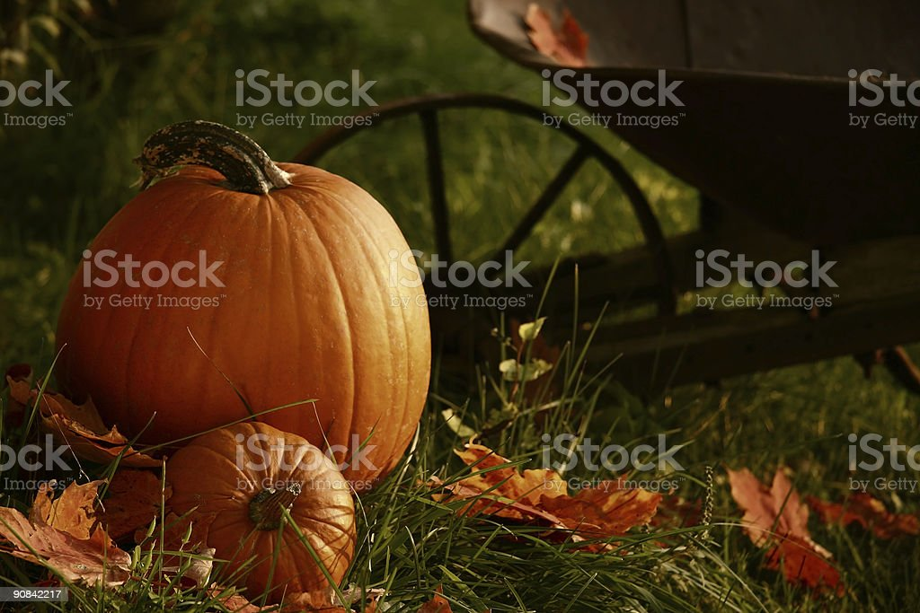Pumpkins in the grass next to a wheelbarrow royalty-free stock photo